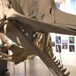 Natuurmuseum Brabant Tilburg